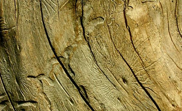15_11_tech_wood_01