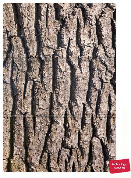 Древесная кора