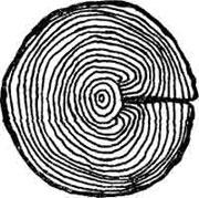 Трещины и деформации древесины