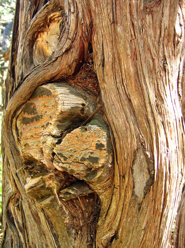 Сорбционные свойства древесины