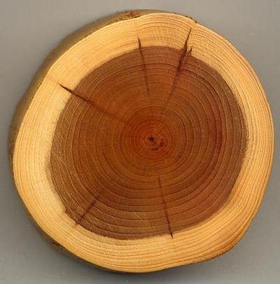 Тепловые свойства древесины