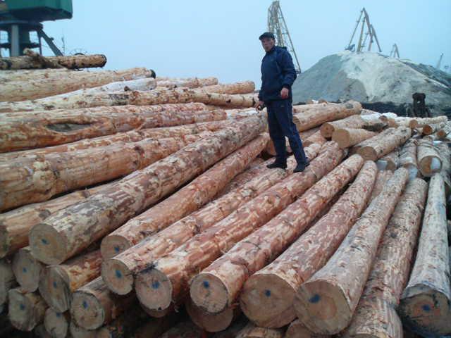 Стандартизация круглых лесоматериалов