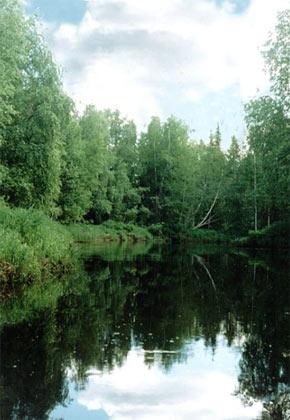 Лесной фонд России